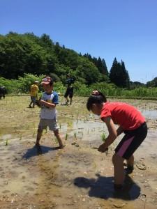 あつまれ、はまわらす!はまわらす米の田植え&キャンプ場プロジェクト @ 浜わらす田んぼ